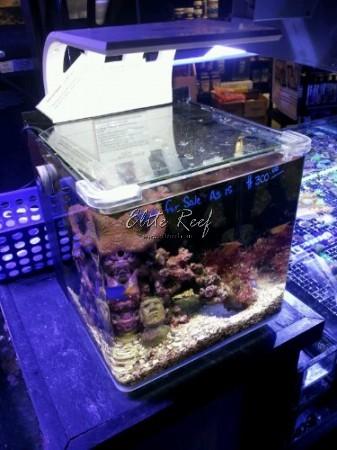 CADLights-4-Gallon-Nano-Aquarium